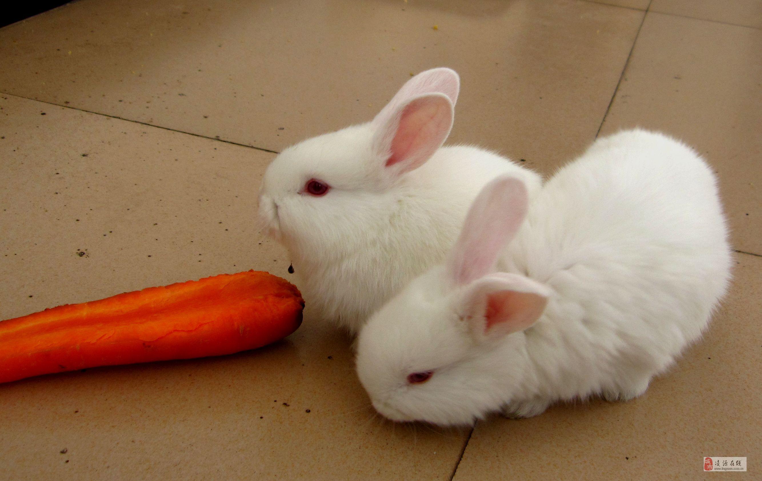 小白兔白又白分享展示