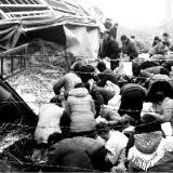 郑州一货车侧翻19吨胡萝卜散落一地百余人哄抢