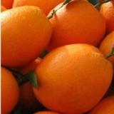 [团购]赣南信丰脐橙 节日礼品个人送礼单位采购礼品年货订购