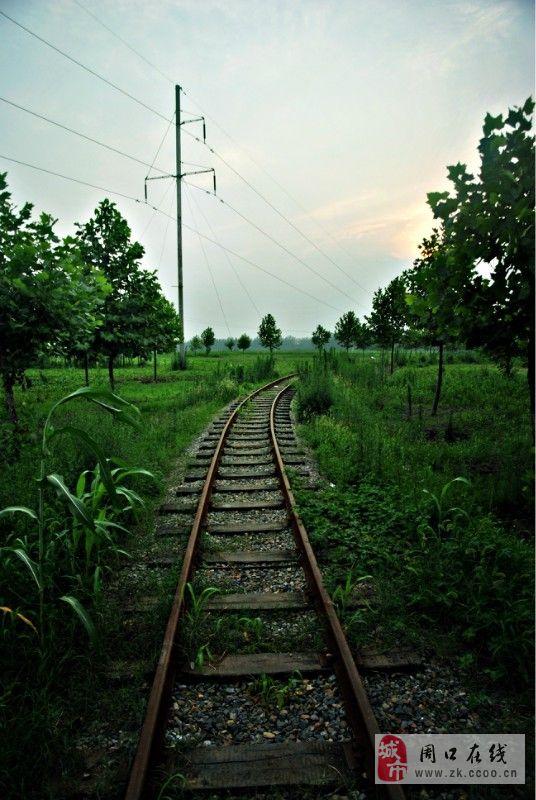郸城夏天铁路风景