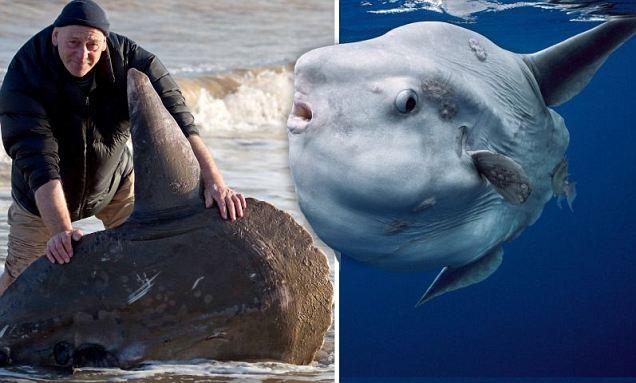 壁纸 动物 海洋动物 桌面 636_383