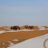 大漠驼乡――沙金湖的冬天