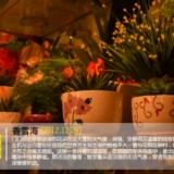 【乐途009】香雪海
