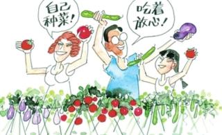 市民菜园:澳门葡京平台居民租地种菜成热潮