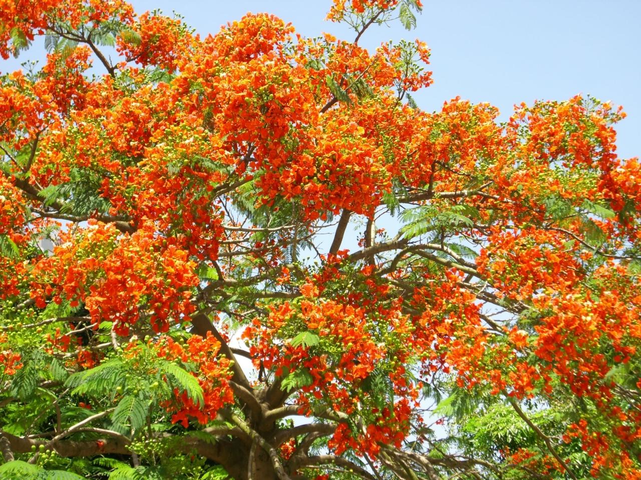 动态的大海树木鲜花