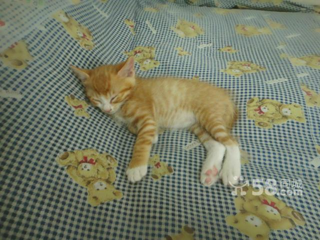 猫咪求领养...