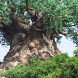 神奇的万兽树,你见过没有?