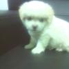 [求助]朋友的一只萌狗・・・求爱狗的好心人带走