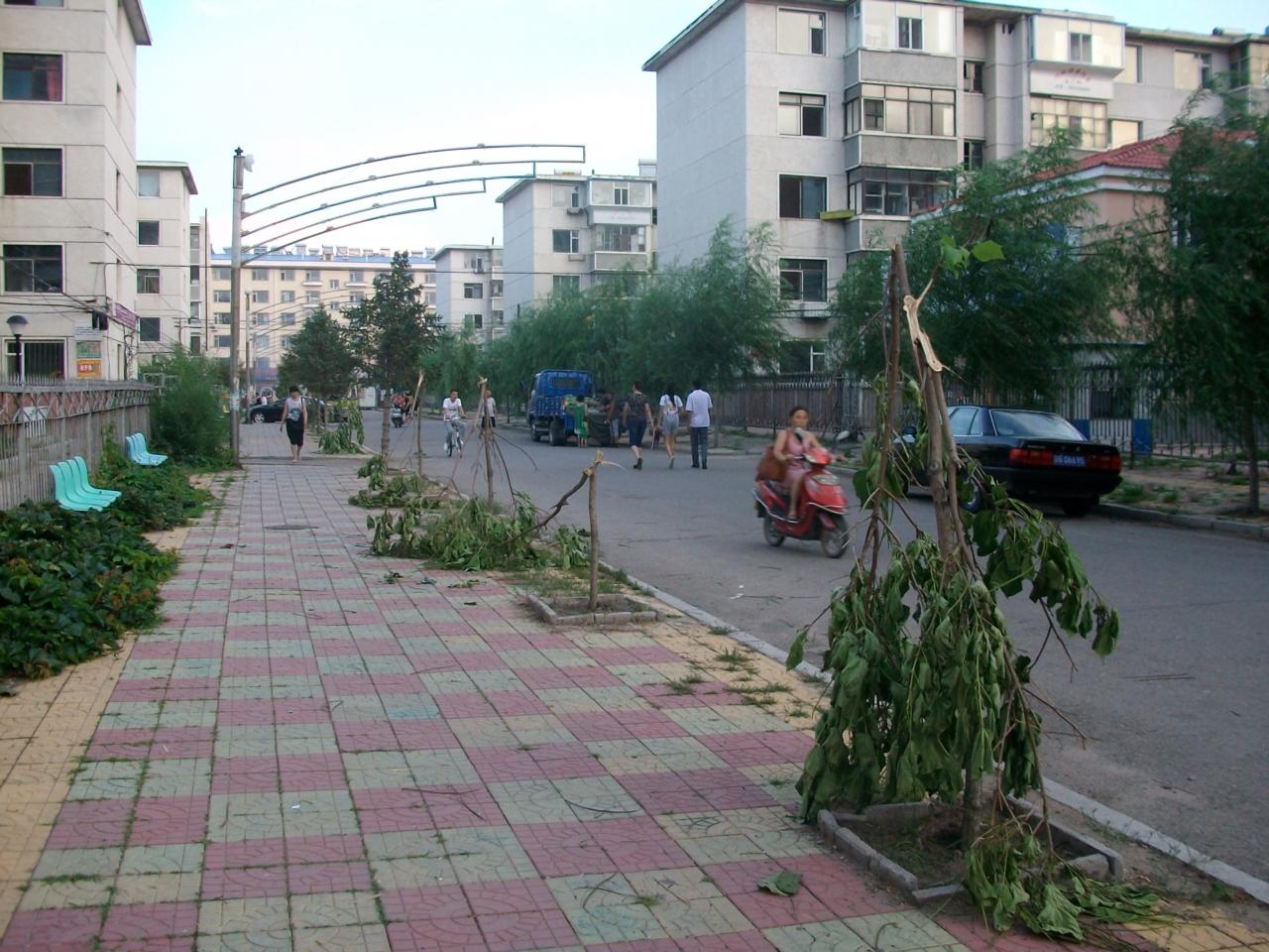 [原创]通业小区内梧桐树一夜被人破坏