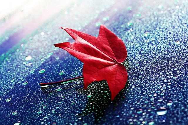 [转贴]20张关于叶子的精彩摄影作品