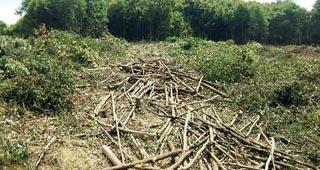 盗伐林木被重罚