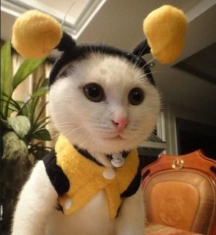 可爱宠物 宠物搞笑图片