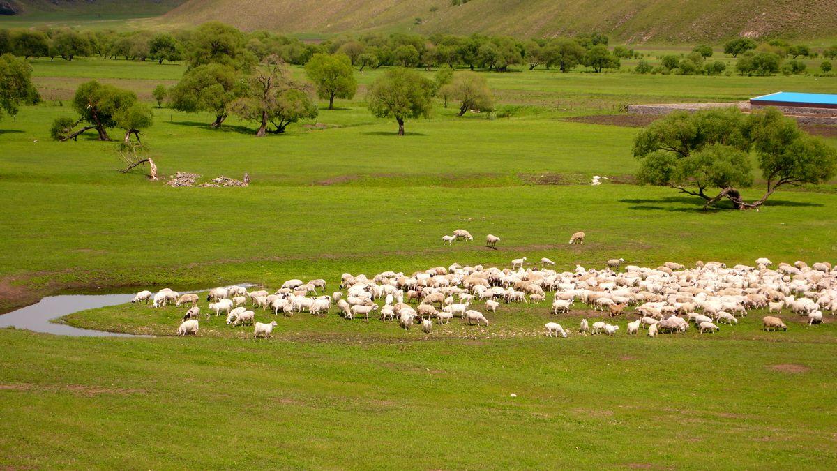 骑行内蒙古看那山水草原 那蓝天白云 那蒙古族兄弟