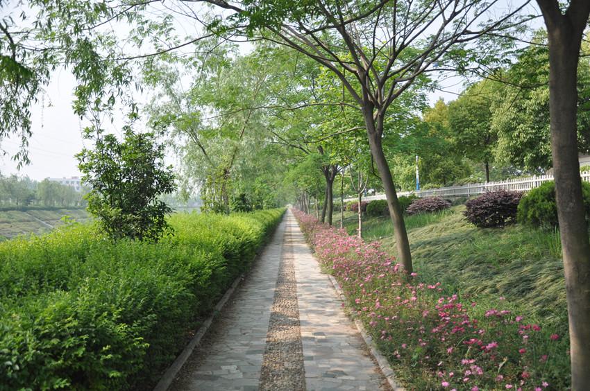 美丽临泉之--路边风景