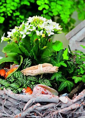 [转贴]多肉植物的种植养护须知