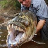 探秘可攻击鳄鱼的亚马逊水怪