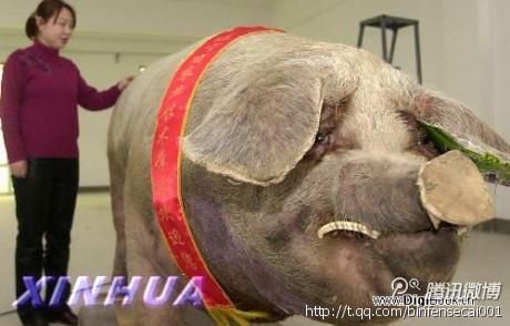 [讨论]泰顺县的 猪王寿终正寝的时候 村民曾想过造水晶棺