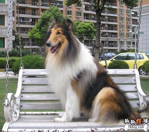 名狗名称及图片大全,名狗品种大全,名狗品种,世界名 ...
