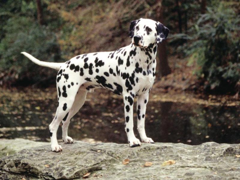 [下载]世界名狗排名,稀有品种啊,我是没机会养咯