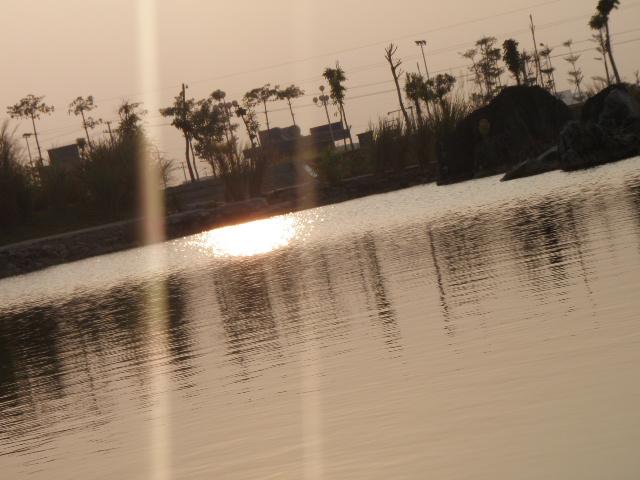 [分享]师院的湖,还是有一点生机的