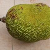 [讨论]湛江特产菠萝蜜,为什么用脚碰了会烂?