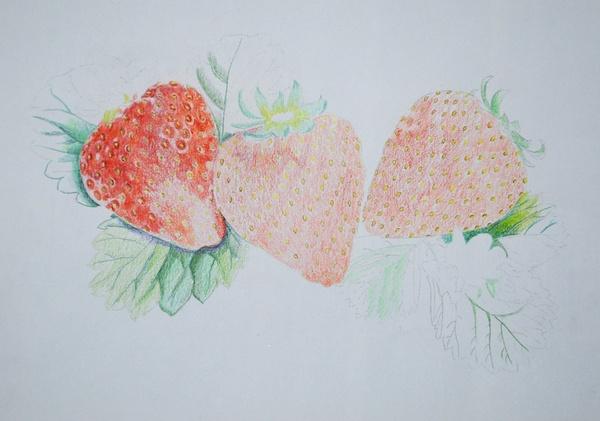 彩色铅笔艺术画,彩色铅笔科技画,彩色铅笔画花卉