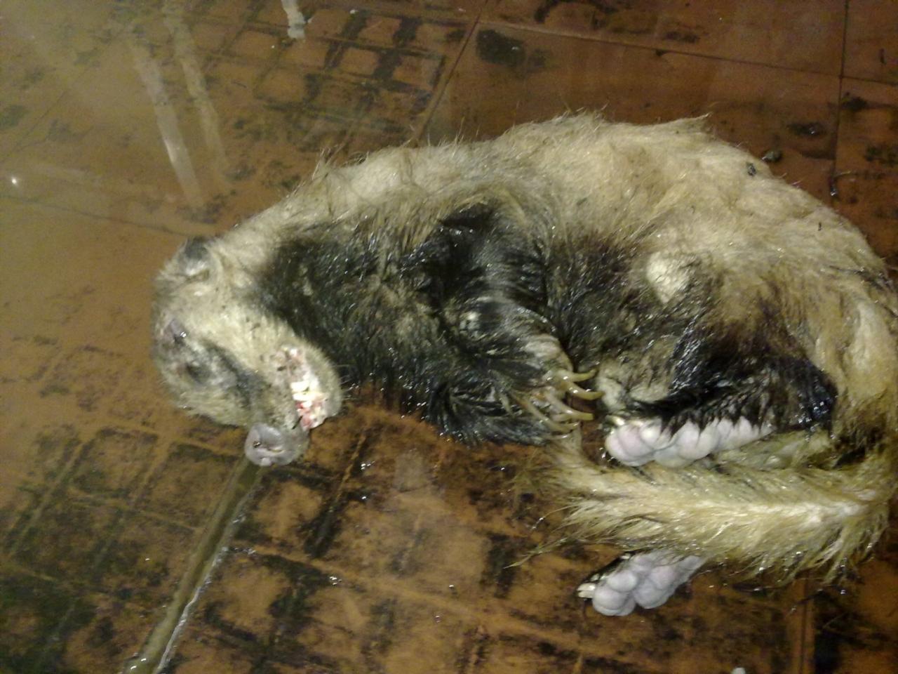 朋友在棉湖水库抓到一只 水猴 ... : 一研究 : すべての講義