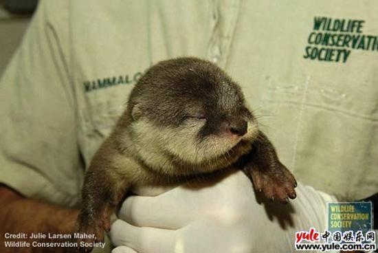 十种最可爱动物宝宝