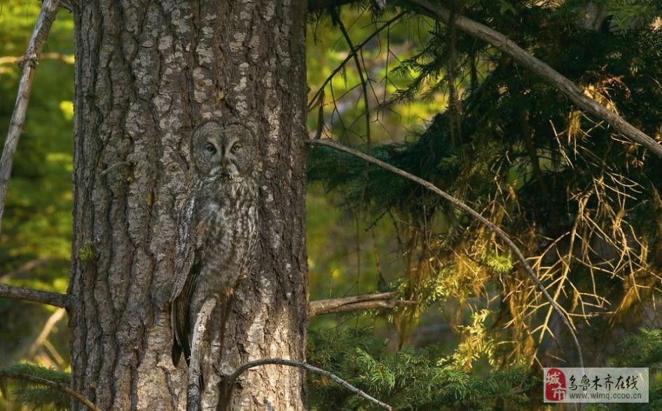 动物世界的隐身术,你能看出来吗?