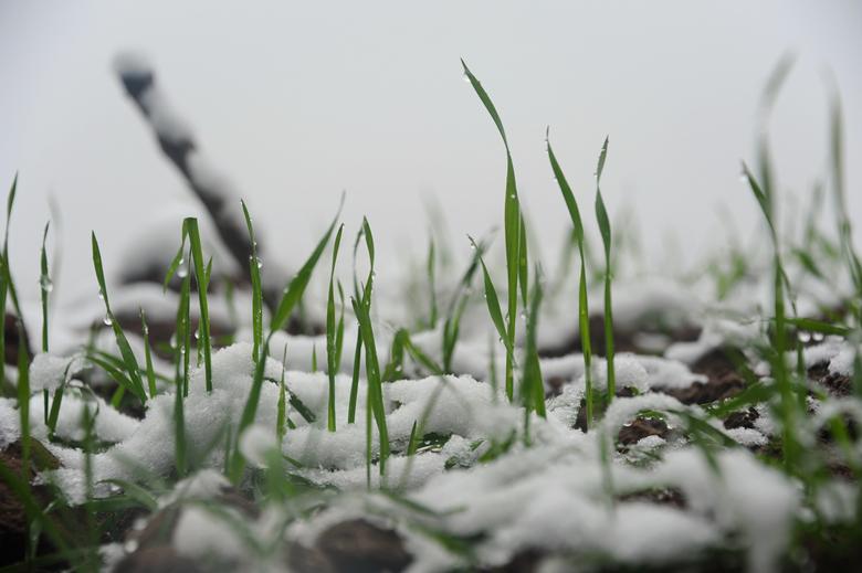 [原创]盐亭的雪