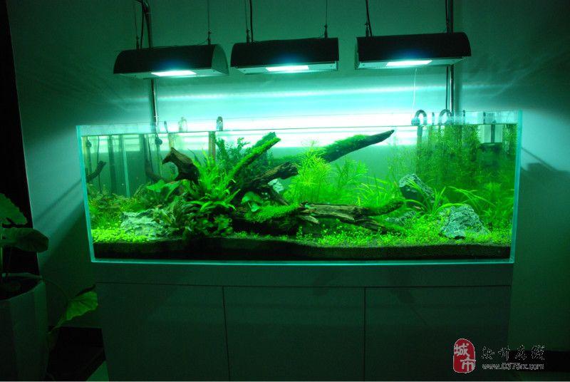 水族店连体鱼缸尺寸设计图