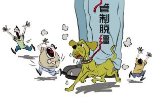 漳州狗患成灾 伤人事件时有发生需规章严管