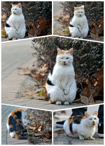 """[分享][推荐]小猫路边""""搓手"""" 引来网上一片怜爱 `"""