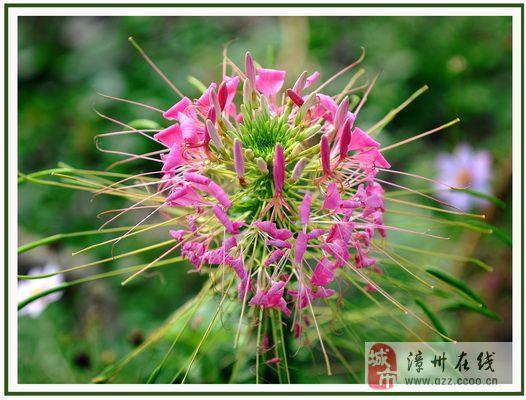 一组美丽花卉与大家一起分享