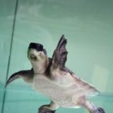 新宠————猪鼻龟