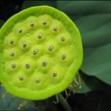 美��花世界―艾美花行的小小花圃-�~材篇