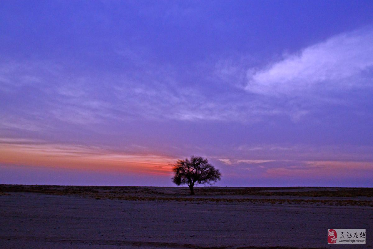 [原创]戈壁印象之 一棵树