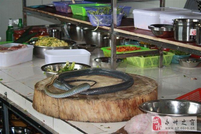 求赐教美味的做法――蛇