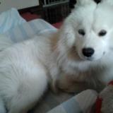 看看我家的狗狗