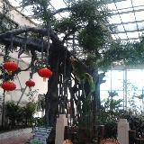 武清�^灰�口的五登生�B大酒店,寒冷的冬天也是一片春意盎然的景色!(�D)