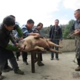 [原创]实拍2013年我们农村杀猪过年