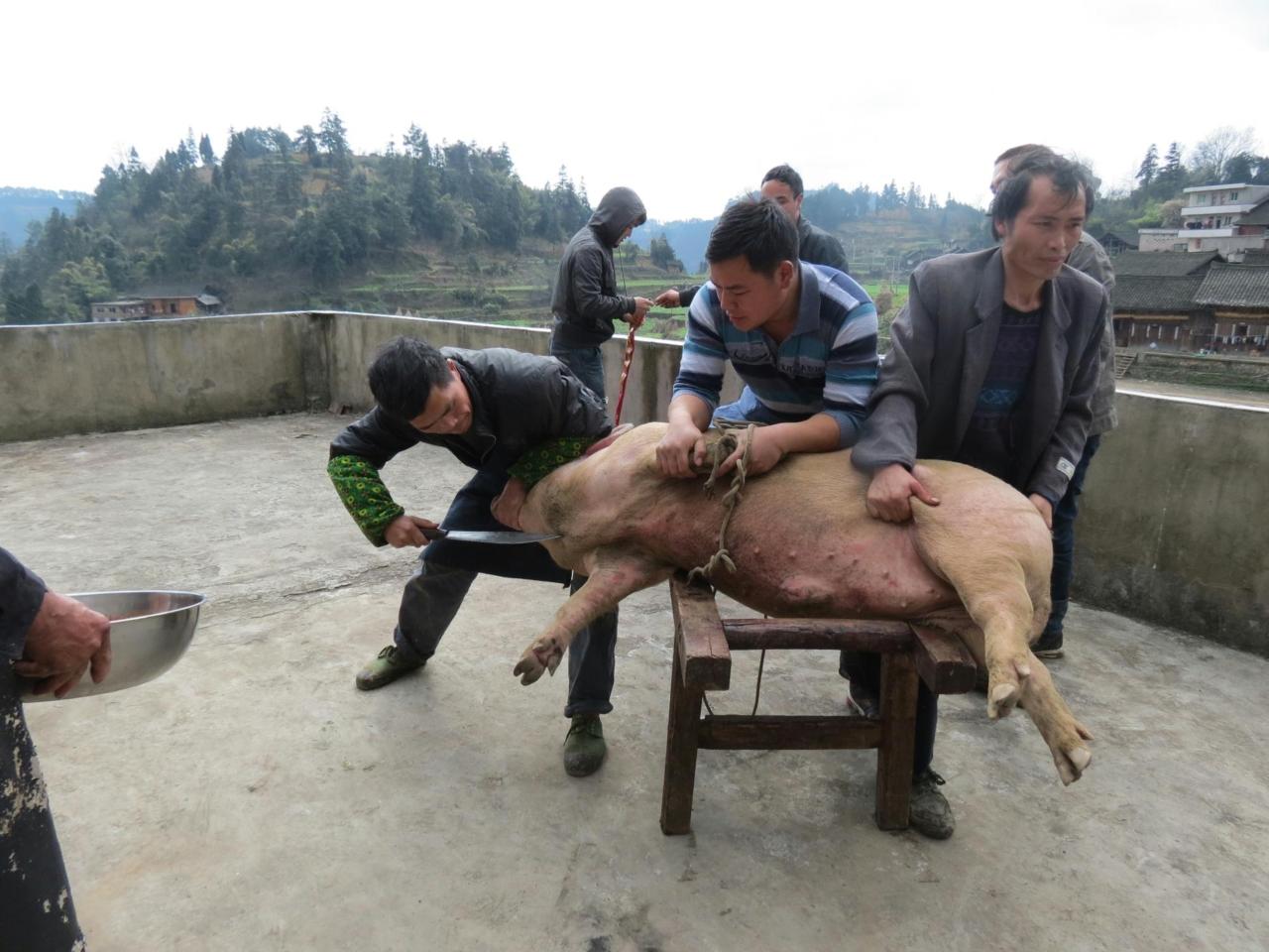 实拍2013年我们农村杀猪过年
