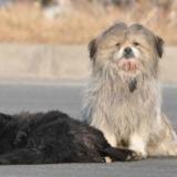 一流浪狗被撞身亡