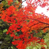 大石湖红叶
