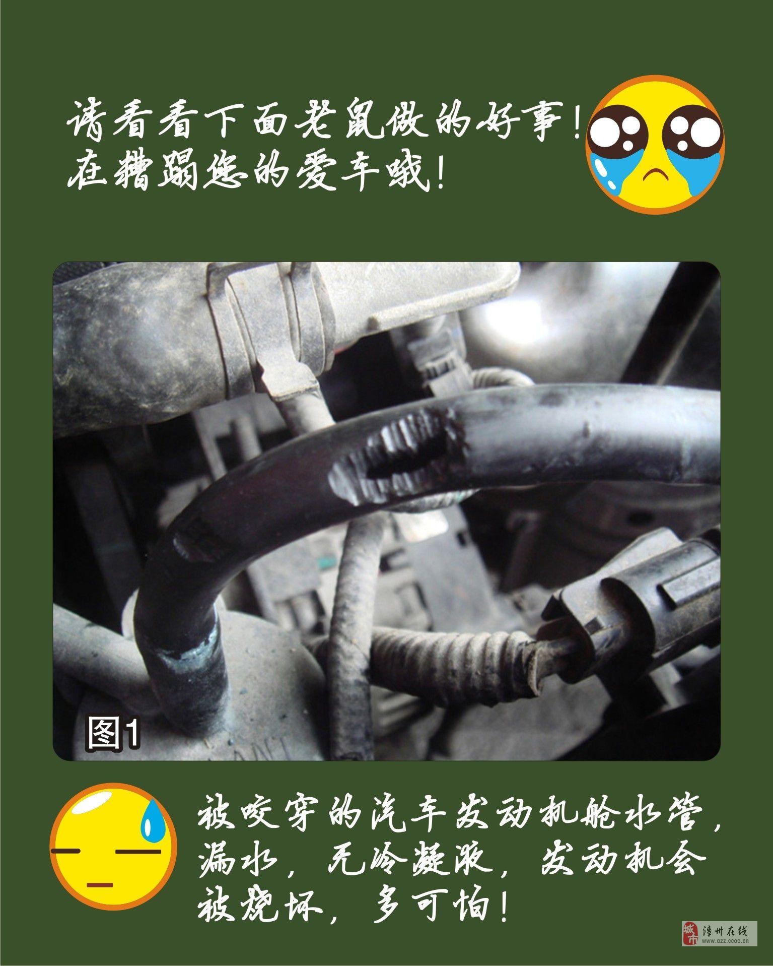 [贴图][公告]老鼠恋上车 吃喝拉撒带磨牙