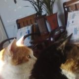 瞧瞧我家两个吃货猫咪咖喱和菲菲