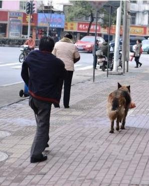 武汉一大狗叼着2袋水果追随残疾主人 感动网友