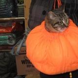 我家萌猫凯斯