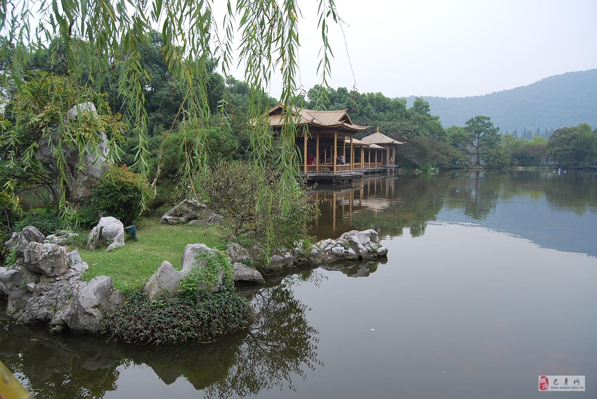杭州市千岛湖松花树