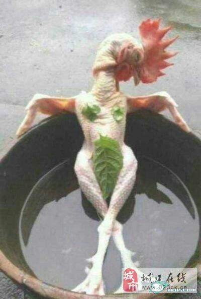 看这鸡,你鸡冻了吗?